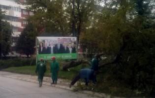 Sječa stabala zbog boljeg pogleda na reklame bh. političara