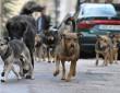 Članovi udruženja za zaštitu pasa fizički napadaju službenike Higijenskog servisa za hvatanje pasa lutalica