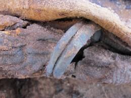 U Egiptu otkriveno groblje s milion mumija